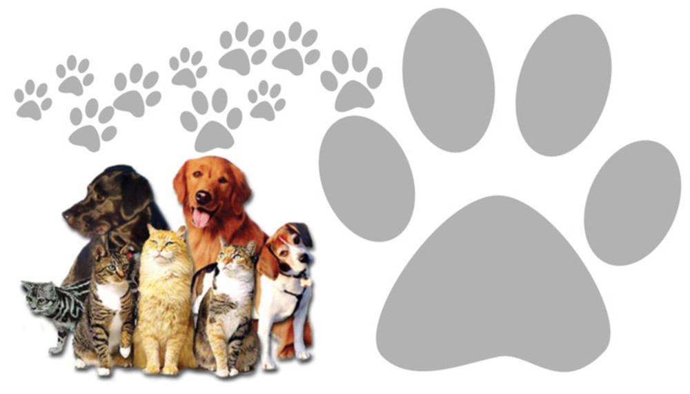 Banner Pet Care Dogs Cats And Paws Savia Volunteers Website